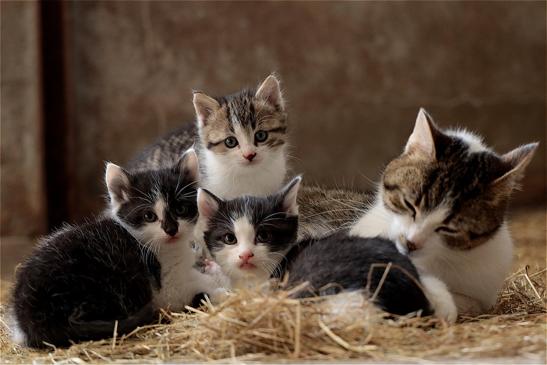 These Are The 22 Most Expensive Kittens To Buy In The Uk Glasgow Times