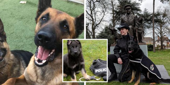 Glasgow police dog handler raises funds for memorial for heroic canines