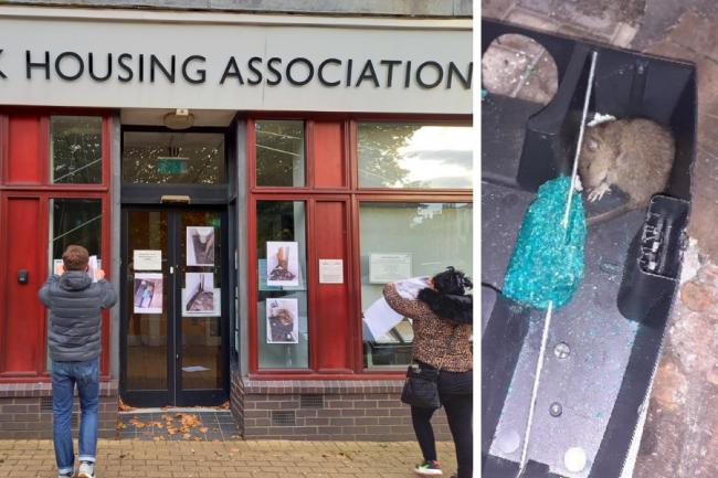 Pictures of rat-infested flat plastered on housing association office as family-of-three unable to use kitchen