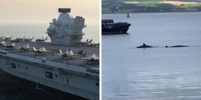 Pod of whales to be herded from Clyde ahead of major military exercise