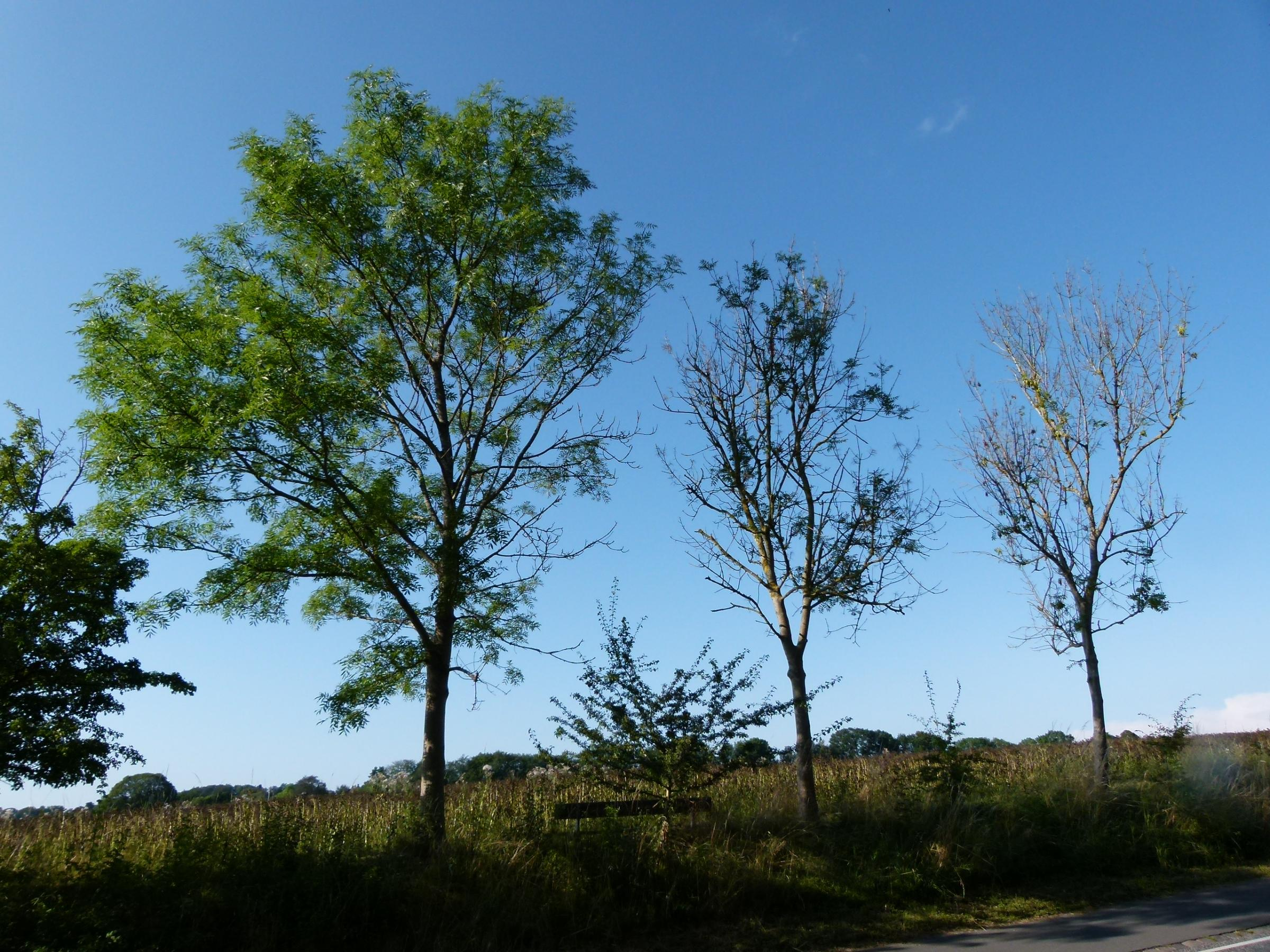 Glasgow survey of trees as thousands under threat from deadly disease