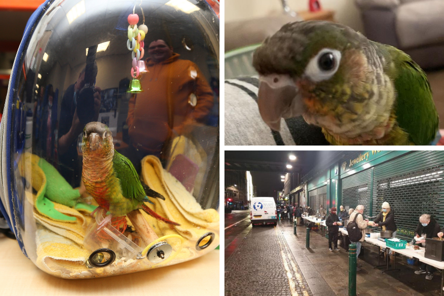 Missing Glasgow parrot that dishes out meals at city soup kitchen reunited with owner