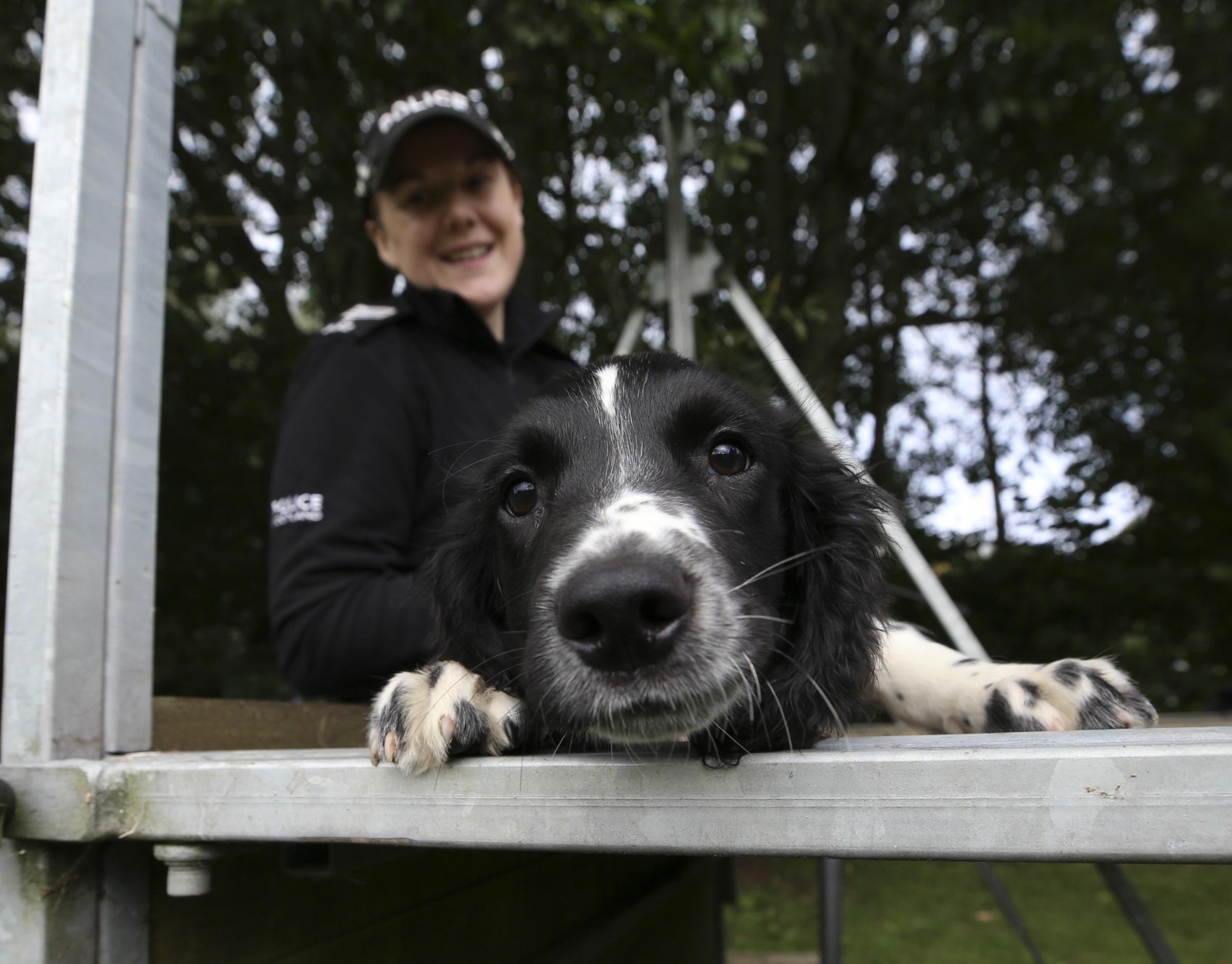 Glasgow's police dogs and handlers prepare ahead of COP26