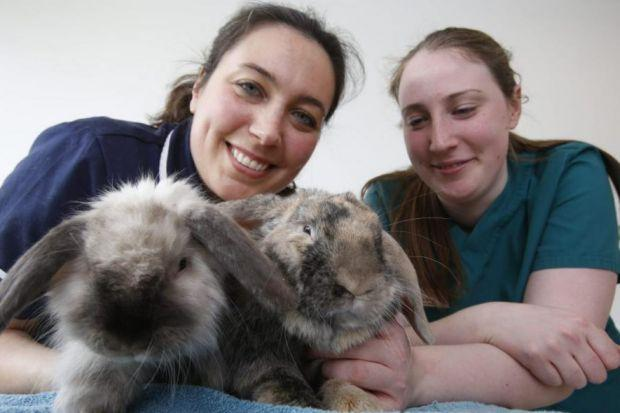 A Rabbit Wellness Clinic has opened at Glasgow's Small Animal Hospital