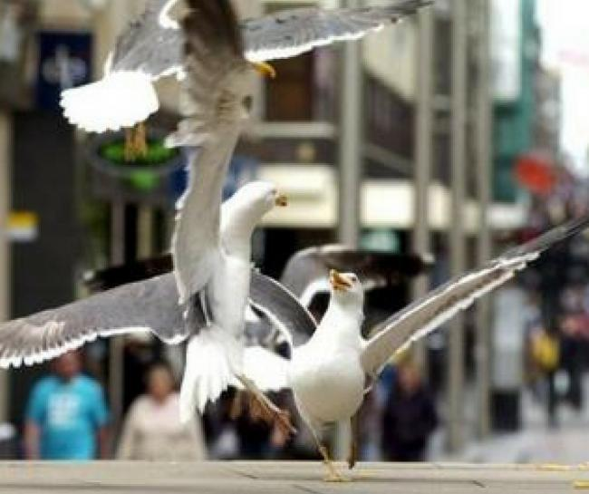 Almost 200 gulls shot as city cracks down