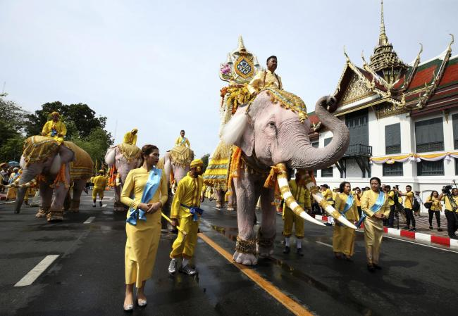 Elephants are paraded outside the Grand Palace in honor of Thailand's King Maha Vajiralongkorn following his coronation ceremony in Bangkok  Picture: AP Photo/Rapeephat Sitichailapa